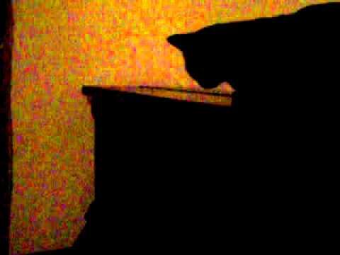 Il gatto che amava la musica e Gioele