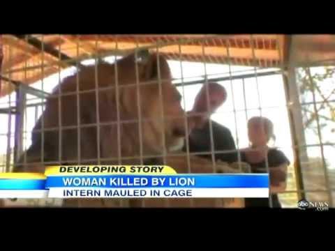 Lion Attack Kills Intern, 24, at California Sanctuary