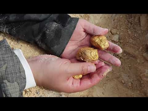 Gold metal detector / gold deposits hidden in the stone wall