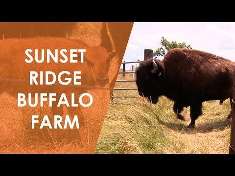 Sunset Ridge Buffalo Farm  North Carolina Weekend  UNC-TV