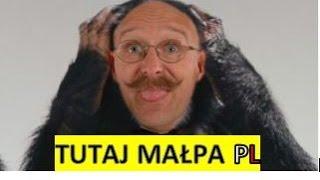 STAN TUTAJ - TUTAJ MAŁPA PL