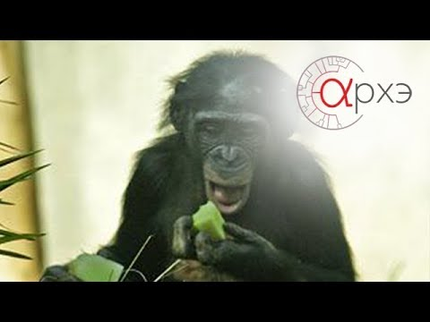 Вопрос: Зачем обезьяны часто поворачивают голову и делают много движений?