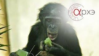 Станислав Дробышевский: 'Приматы: в прошлом и настоящем'