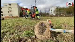 Cent arbres plantés en une journée à Lausanne