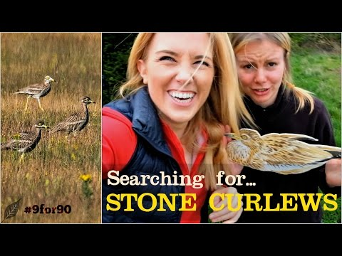 Searching for STONE CURLEWS | Maddie and Norfolk Wildlife Trust