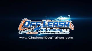 Tennis Ball Obsessed 10YR Old Lab's Transformation at Cincinnati Dog Trainers Off Leash K9