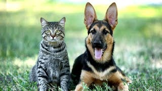 Ученые выяснили, почему одним нравятся кошки, а другим - собаки // Деловые новости и новости бизнеса