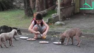 Доброе отношение к животным.
