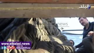 بالفيديو .. «صدى البلد» يرصد عمليات ترميم أسود قصر النيل