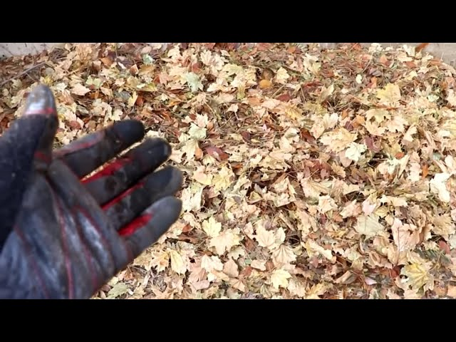 Cody Composts Crunchy Carbon Containing Chips (leaves)