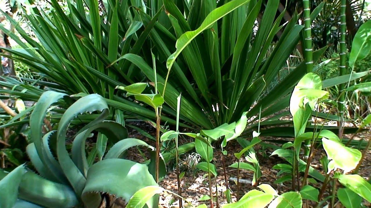 Jardin botanico tenerife 1080p youtube for Jardin botanico de tenerife