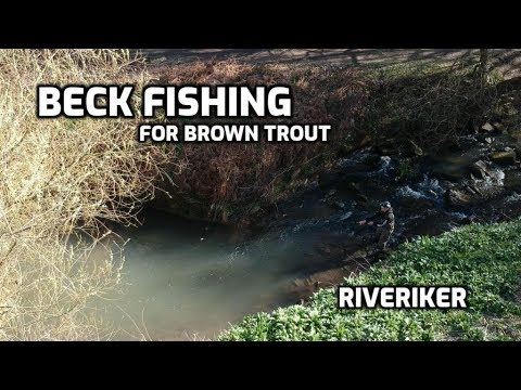 City Beck Fishing For Trout - (video 231)