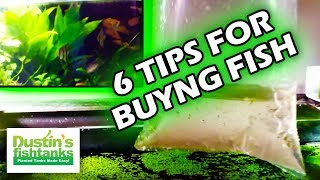 How to buy Aquarium Fish: 6 tips for Buying new fish