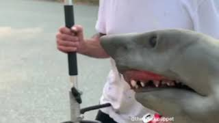 shark-puppet-does-yard-work