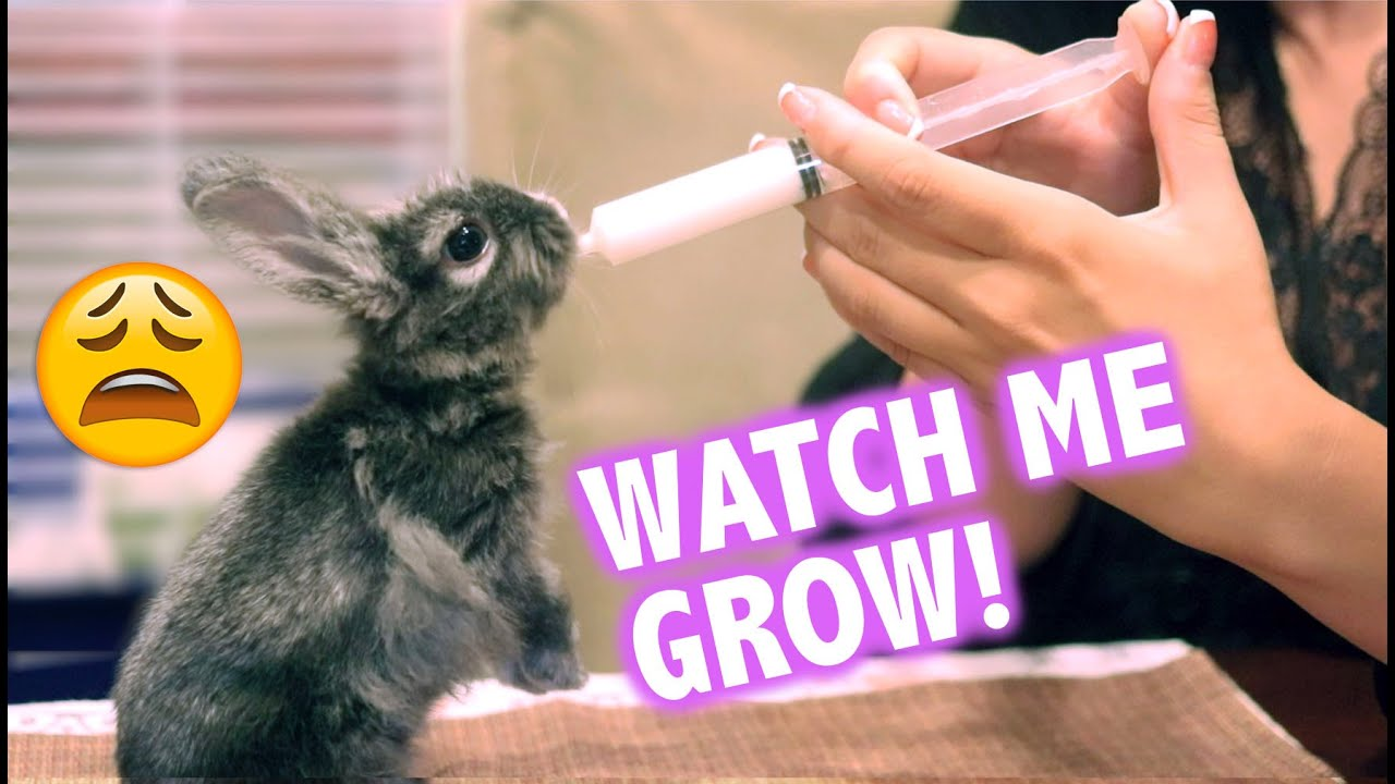 Helping a Baby Bunny Survive After Mother Abandons Her 😭😭😭