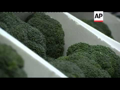 Claims super broccoli protects against heart disease and some cancers