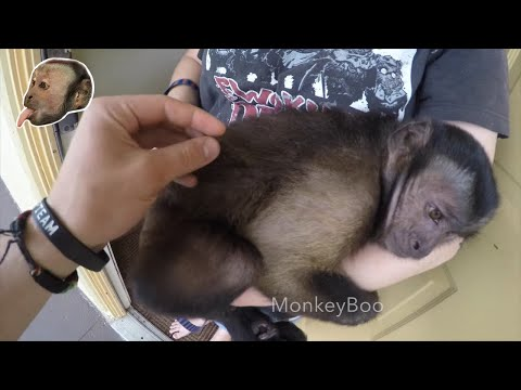 Monkey Jumping and Tickling