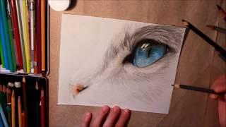 Рисунок цветными карандашами. Кот с голубыми глазами.