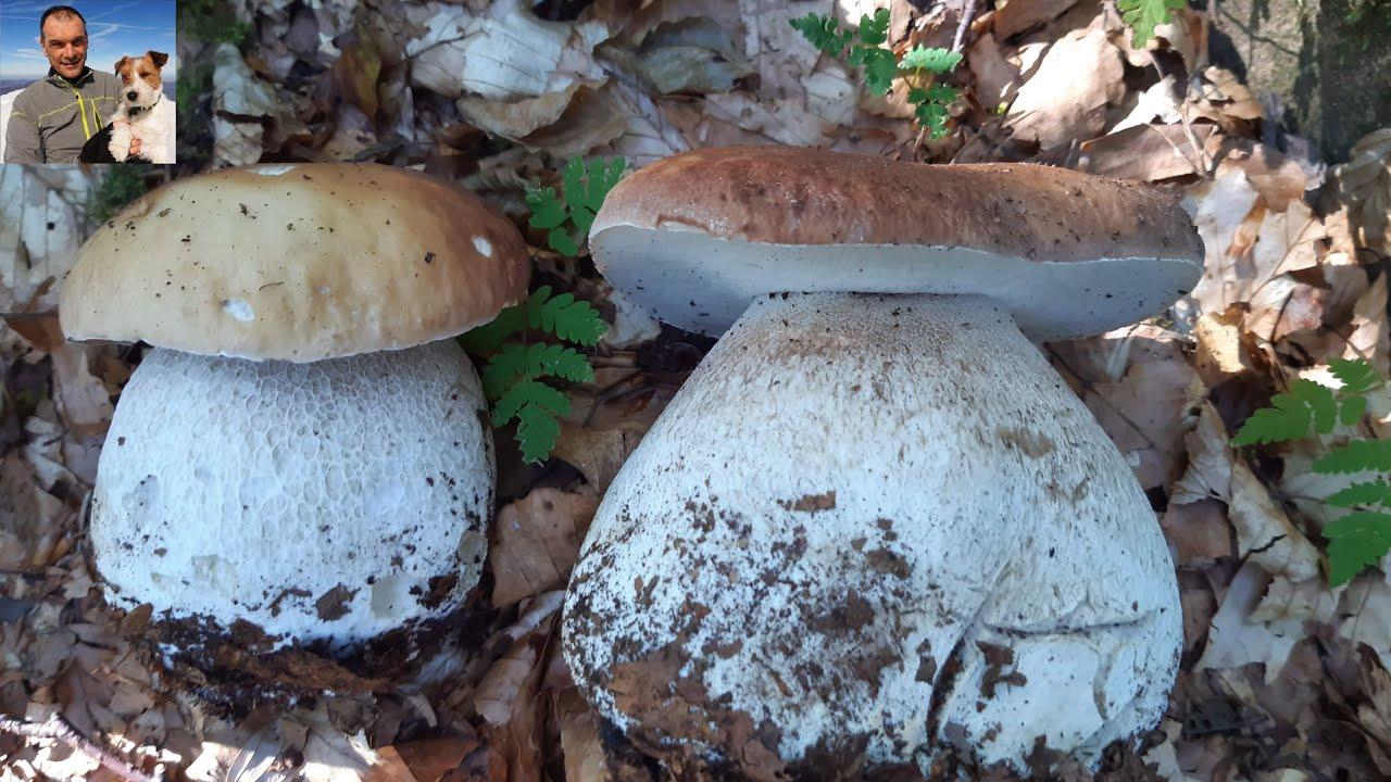 Benvenuti in paradiso - quinta parte -  funghi porcini agosto 2020