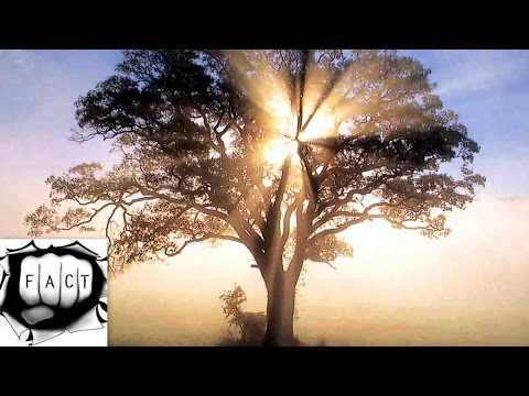 Top 10 Weired Looking Trees on Planet Earth