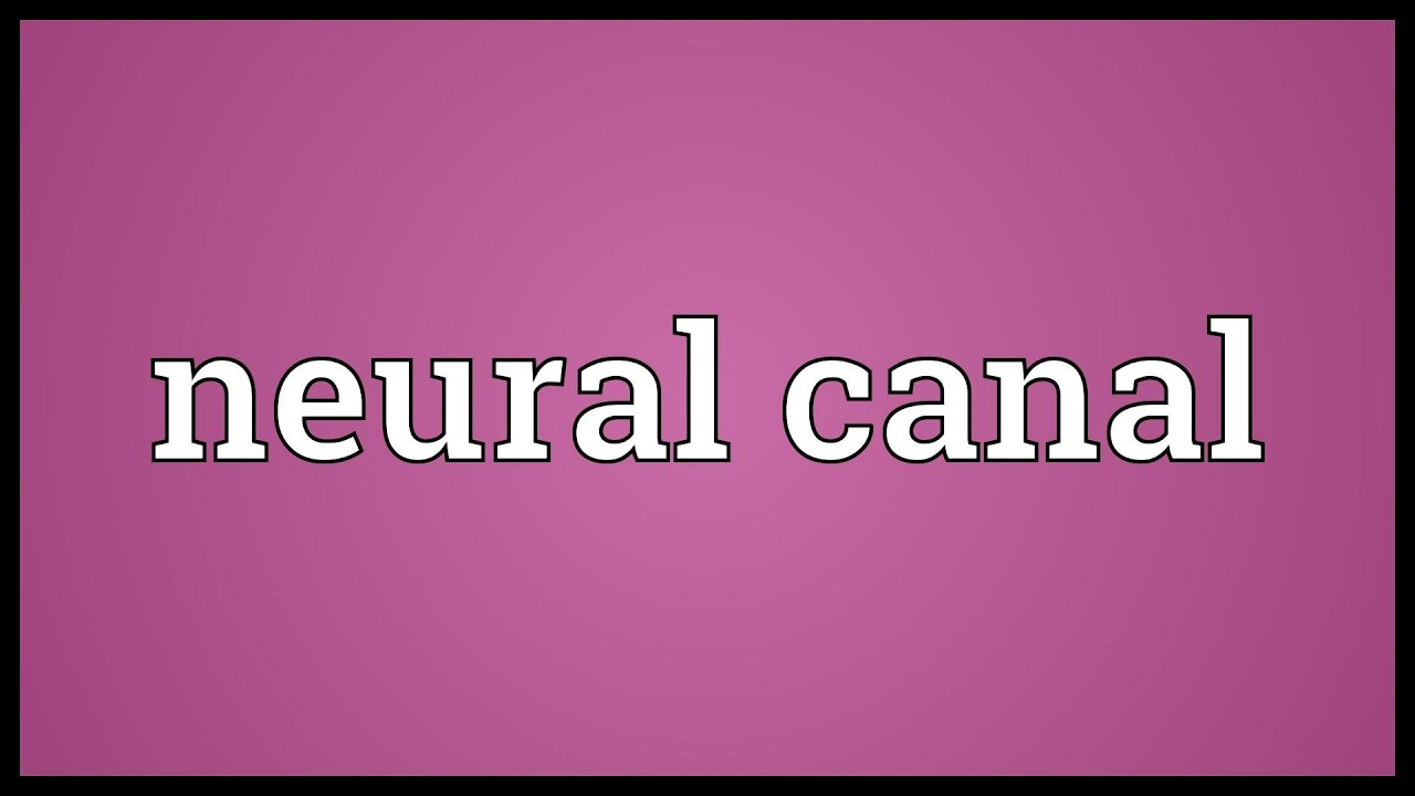 Neural canal Meaning