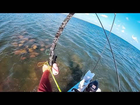 FOUND MASSIVE SCHOOL STINGRAYS... Recurve Bowfishing