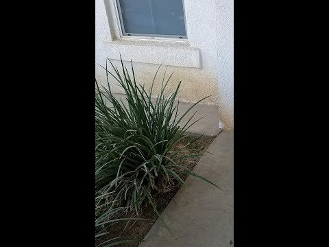 How to remove impacted dirt (stain) in stucco