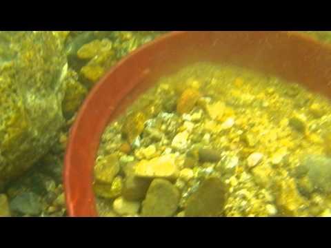 Gold panning underwater camera