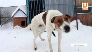 UTV  Появится ли в Оренбурге приют для животных