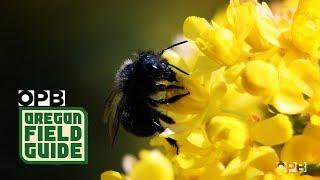 Mason Bees Are A Gardener's Best Friend