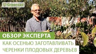 видео Размножение черенкованием, черенкование растений и кустарников