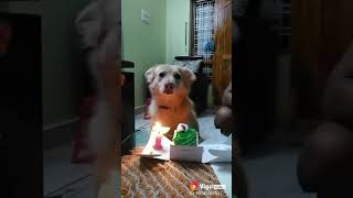 Funny dog, whatsapp video 2018,Vigo hits 2018, happy birthday dog, lovely dog, cute dog, happy wal