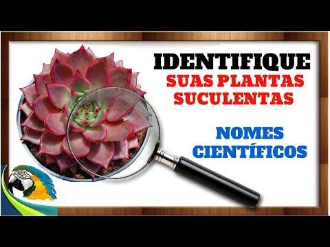 IDENTIFIQUEM SUAS PLANTAS SUCULENTAS MAIS DE 26 ESPÉCIE / 1P#