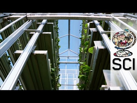 How Vertical Farms Bring Fresh Food To Booming Cities
