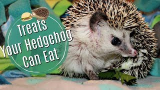 Hedgehog Diet: Treats & Dangerous Foods