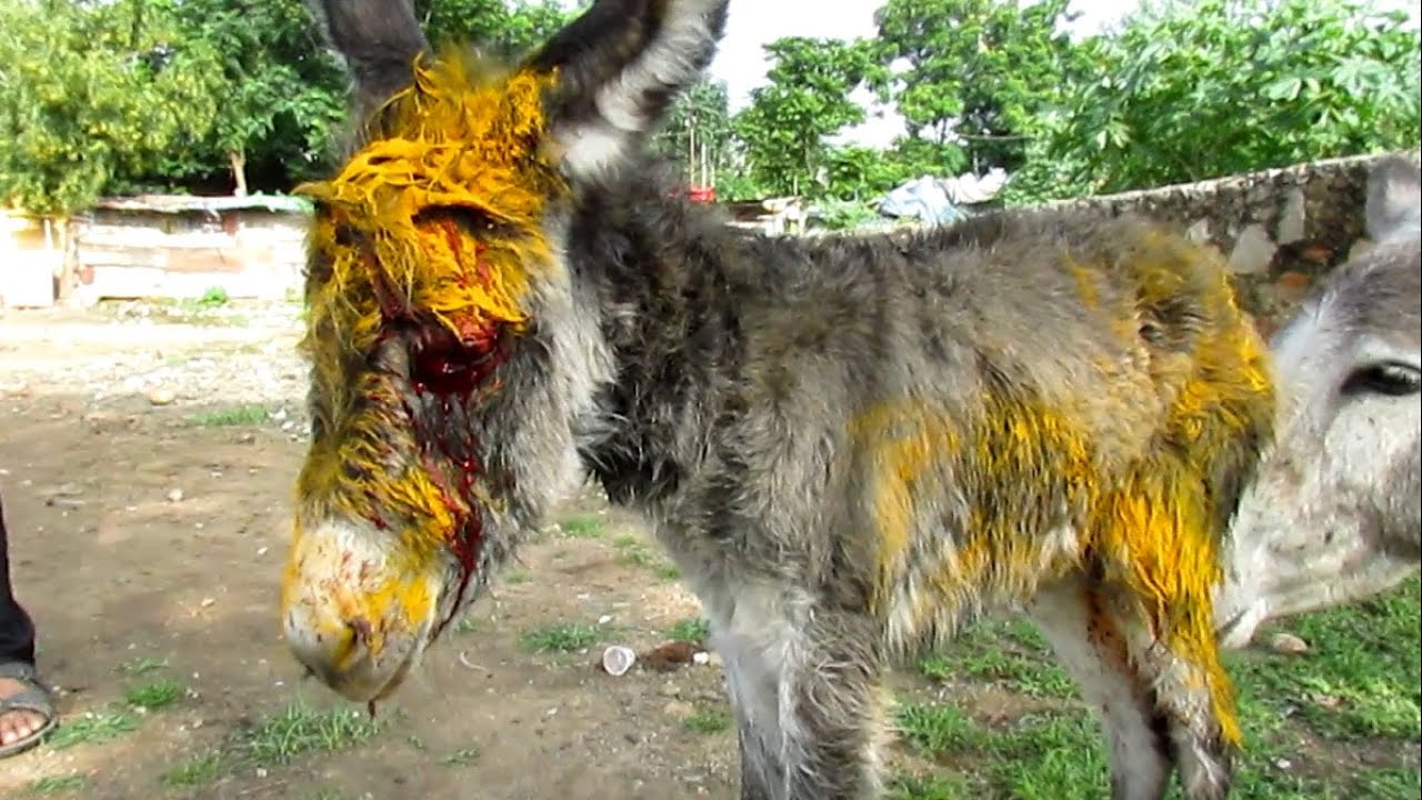 Injured Baby Donkey Rescued Watch Her Mamas Reaction