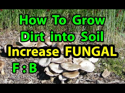 How To Grow DIRT to Healthy SOIL in NO TILL Vegetable Gardening for beginners 101