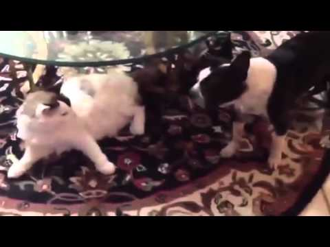 Dogs Afraid of Cats