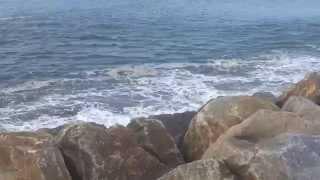 Pesca aos Sargos molhe norte Sao Jacinto