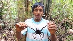 Venezuela, Chasseurs de Mygales