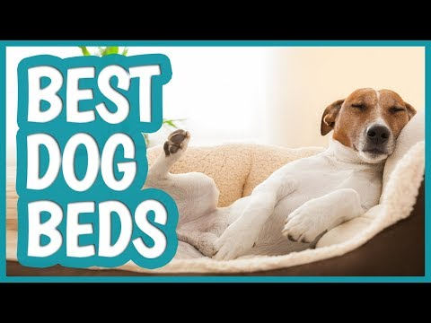 best-dog-bed-in-2019-|-top-11-dog-beds