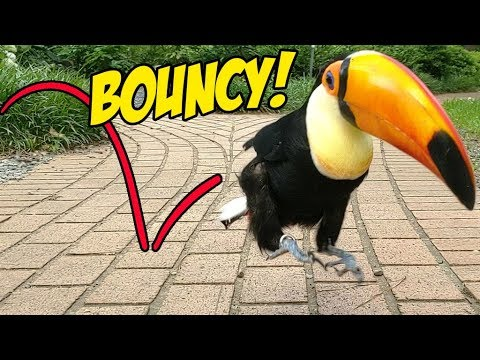 Toucan Hops To Cure Your Depression! (An ADORABLE Montage!)