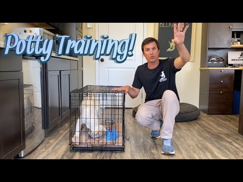 Potty Training your puppy!