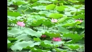 """Nhạc """"Niệm Phật 4 Chữ - A Di Đà Phật"""" (Rất Hay)"""