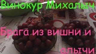 Винокур Михалыч. Брага из алычи и вишни