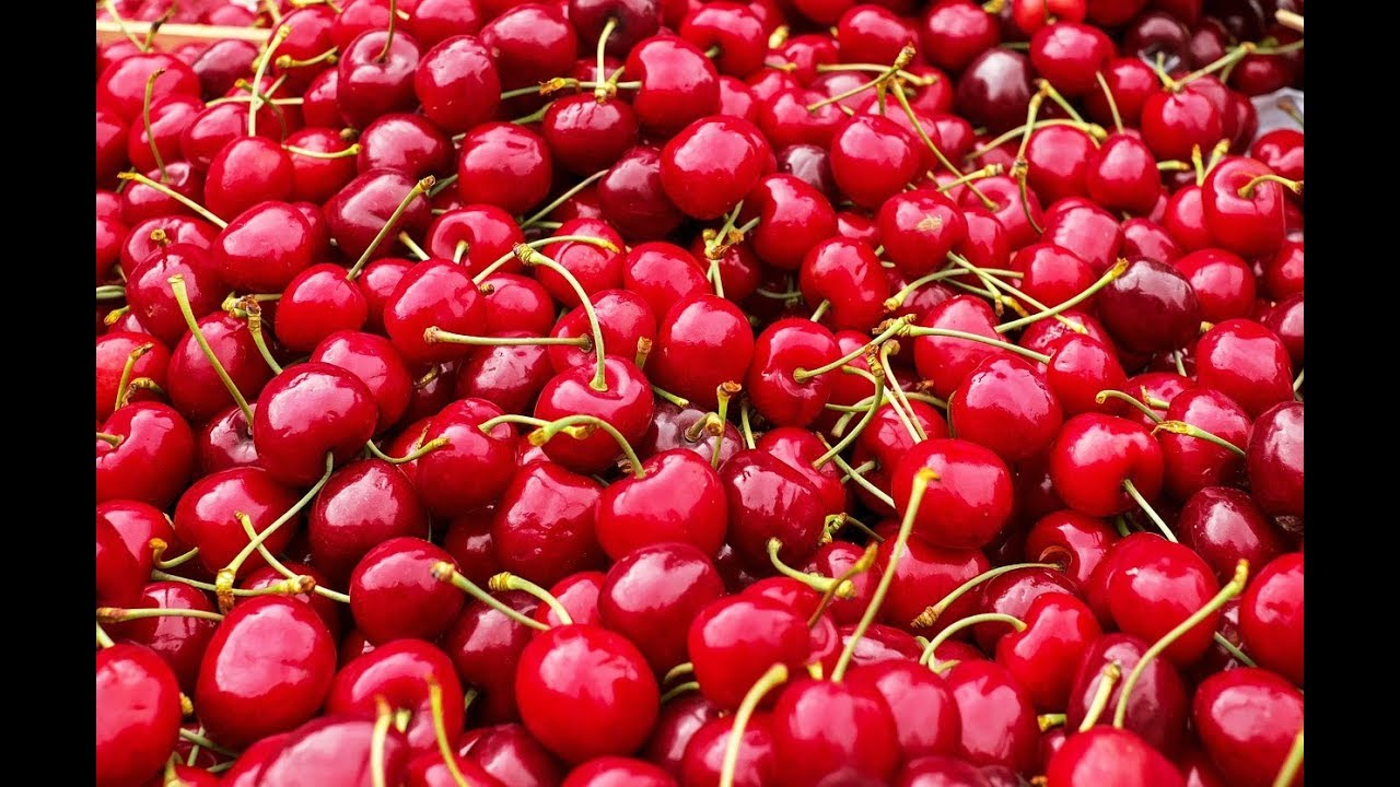 Cherry during pregnancy: the benefits and harm. What are the vitamins in cherry 91