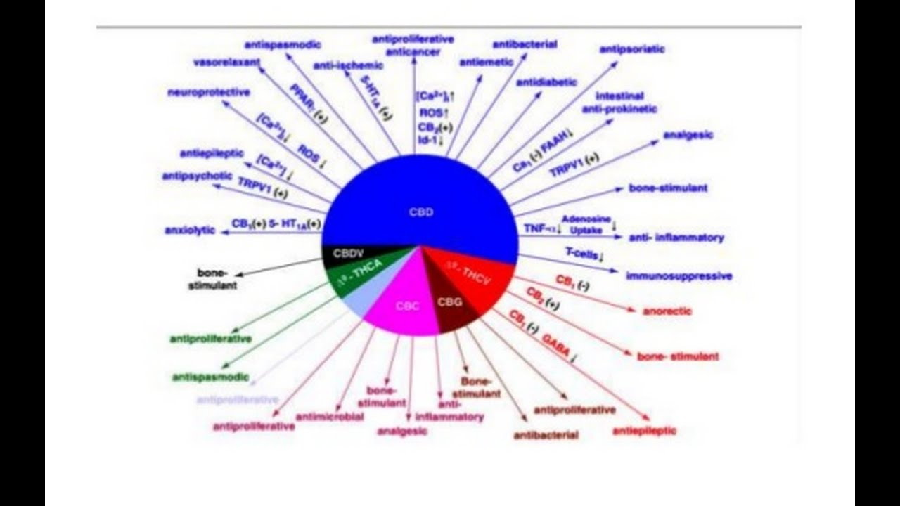 Diagram Of A Pill Bug Bmw Wiring Color Codes Carte Blanche Cannabis Marijuana Dagga In South Africa