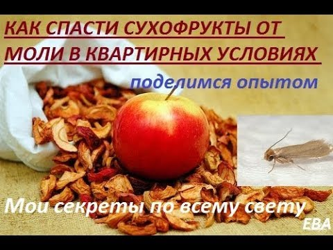 Как сохранить сушку из яблок от моли