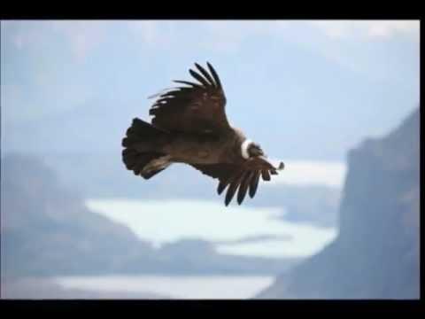 """El Condor Pasa"" Musica Andina – YouTube.flv"