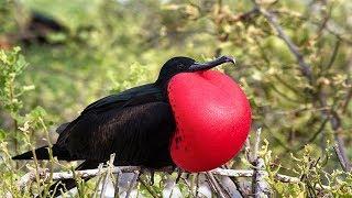HAMPIR PUNAH ! 7 Burung Unik Paling Langka Di Dunia